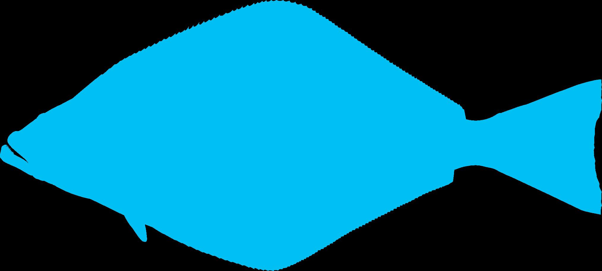 Image-Fish-halibut-shape