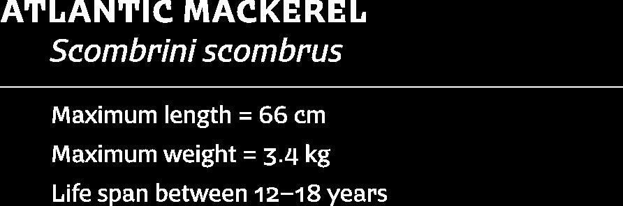 Image-Fish-mackerel-text