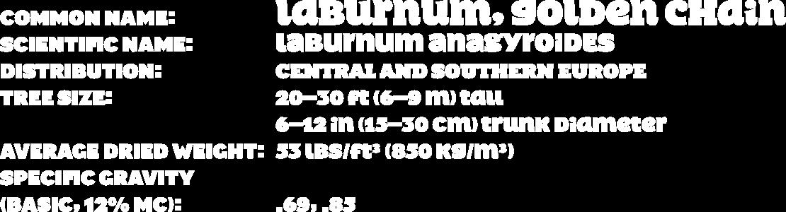 Image-Shr-data-laburnum